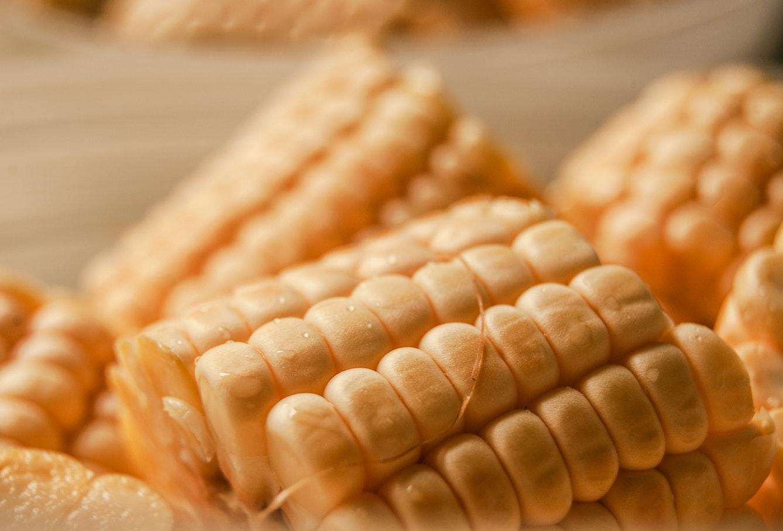 1 a 300-ból: melyik a legjobb kukorica vetőmag?