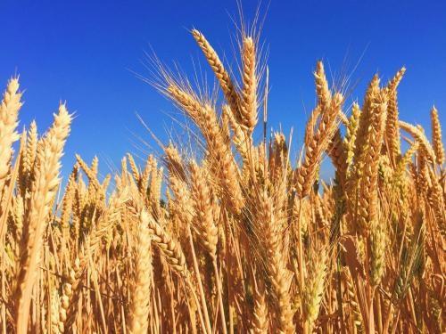 Mi a teendője a termelőnek, ha növényvédőszerre van szüksége?