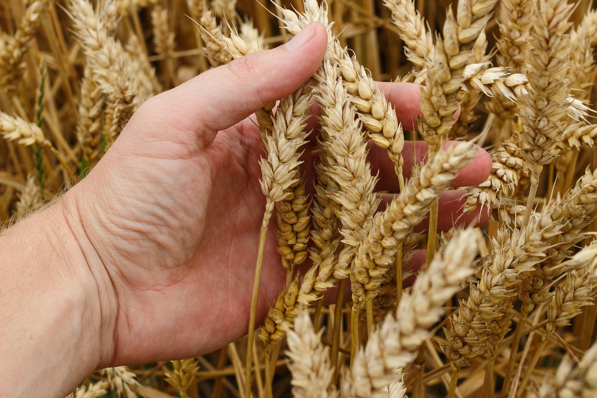 Műtrágya elővásárlás: így függ össze a tápanyagellátás a termés minőségével
