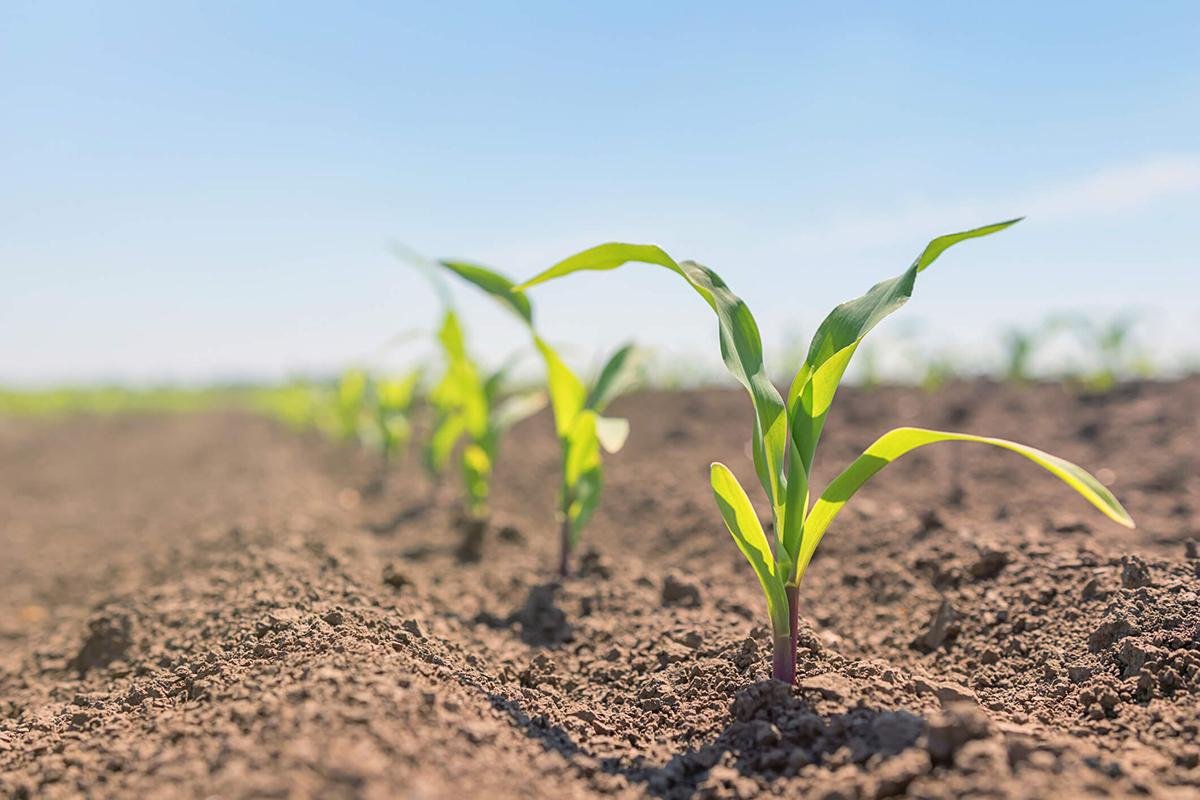 A tavaszi talaj-előkészítés legfontosabb szempontjai