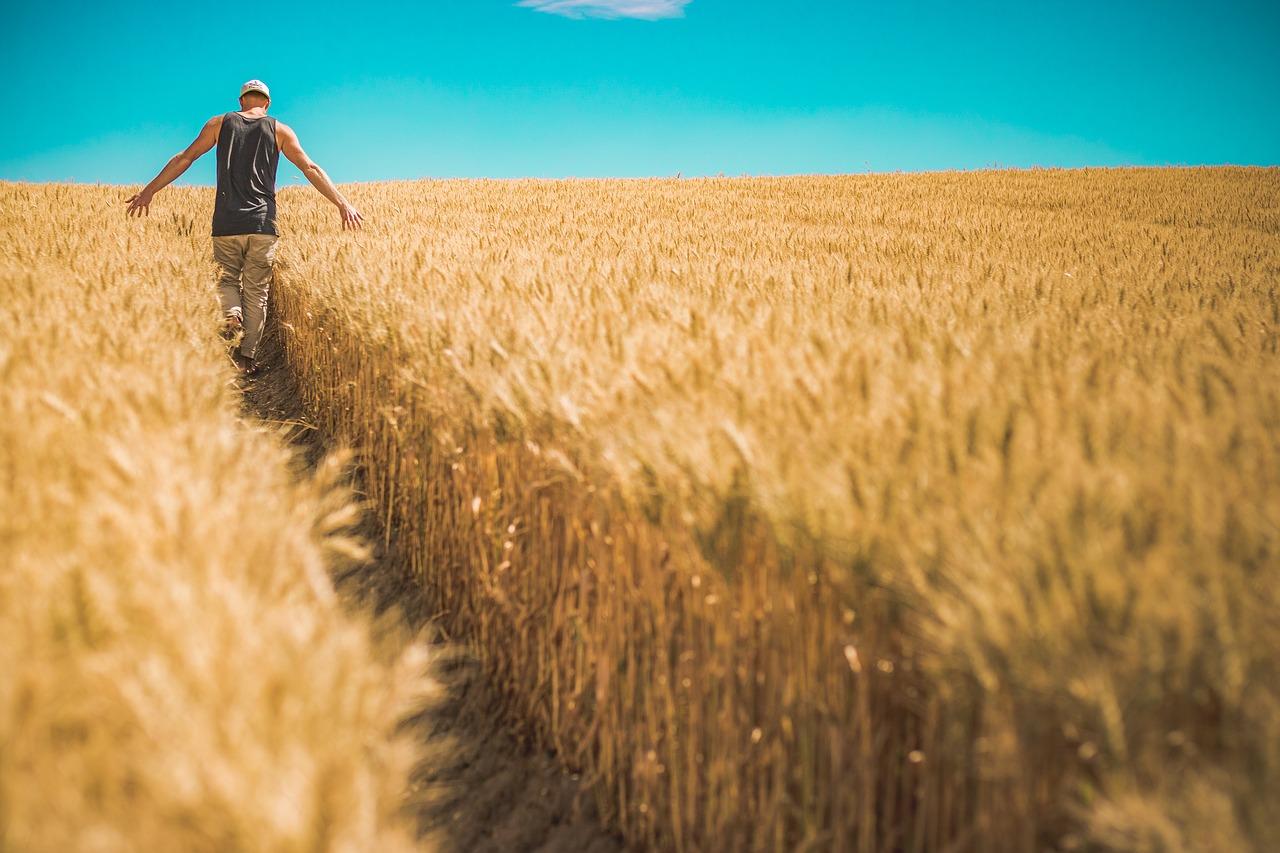 Nagyobb terméshozam ésszerűen: gazdálkodási terv a Hírös Agráriától