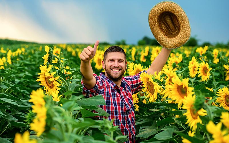 Napraforgó aktuális növényvédelmi teendők